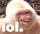KongTroll