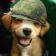 Análise de dragma sobre Top Gun: Hard Lock