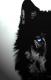 Lon3wolf