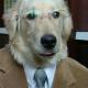 advogado_dorgado